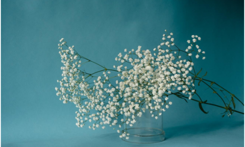 What Does Baby's Breath Symbolize?